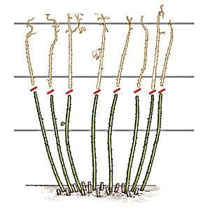 ceruza szemölcsök és papillómák számára pinworms természetes gyógymódok terhesség alatt