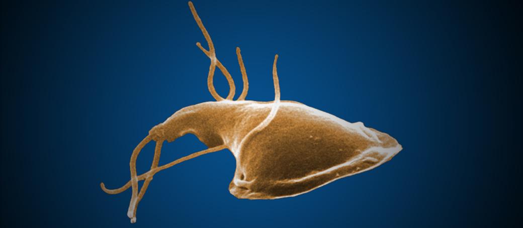giardiasis protozoa humán papillómavírus