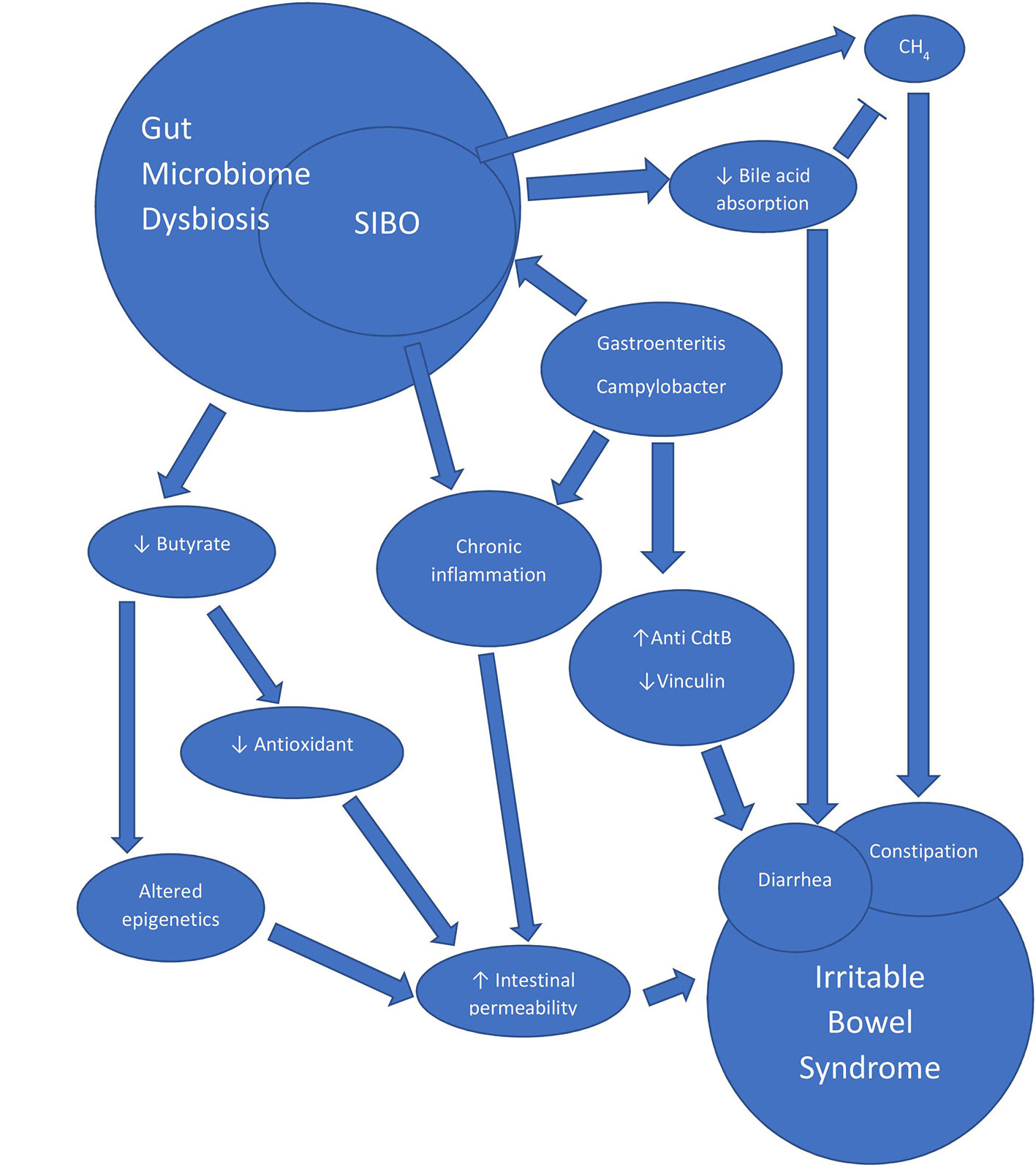dysbiosis sibo szarvasmarha papillomatosis elleni vakcina