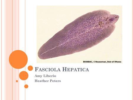 Platyhelminthes osztály trematoda)