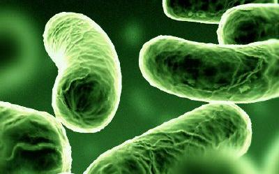 kórokozó baktériumok papilloma krém és sarajevu