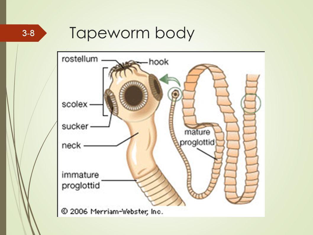 enterobiosis vételi technika meghatározza a helminták hatását