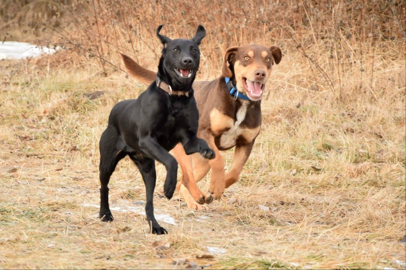 Így tanítsd meg a kutyádat az eldobott labda vagy apport visszahozására