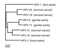 papilloma vírus 81 hogy a rák örökletes