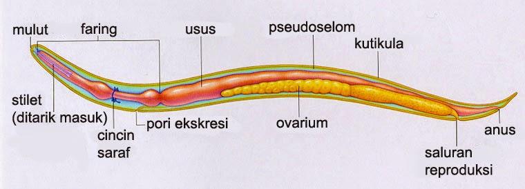 intraductalis papilloma tumor ez a vastagbél méregtelenítő hype