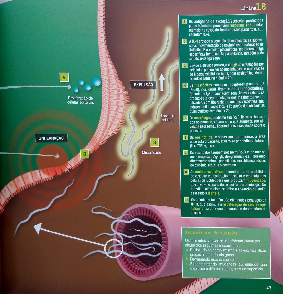 féreg tabletták 6 éves kortól vastagbélrák kezelésére vonatkozó irányelvek