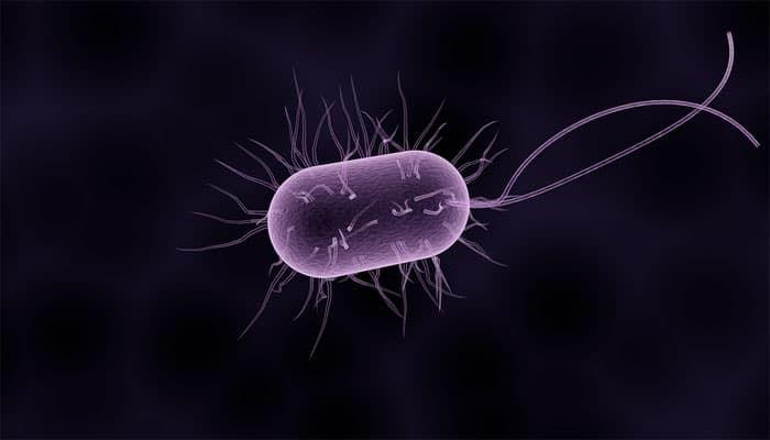 parazita és jetri