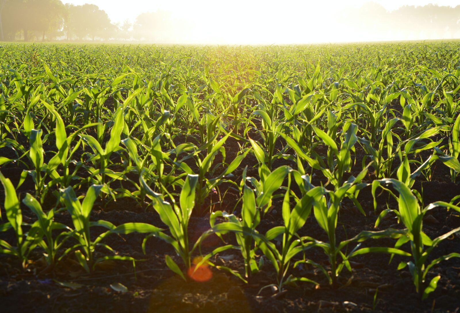 gyűrűs mezőgazdaság gépesítése