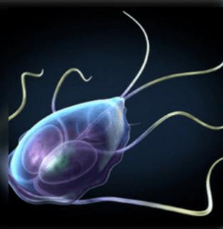 7 jel, hogy parazita van a testben: hétköznapi tünet is jelezheti - Egészség | Femina