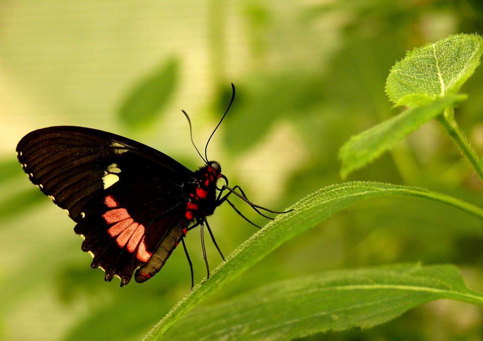 nemi szemölcsök gyógyszeres kezelése ahol a papillómát eltávolítják a szemhéjról