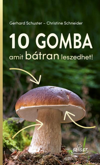 Mikorrhiza – Wikipédia