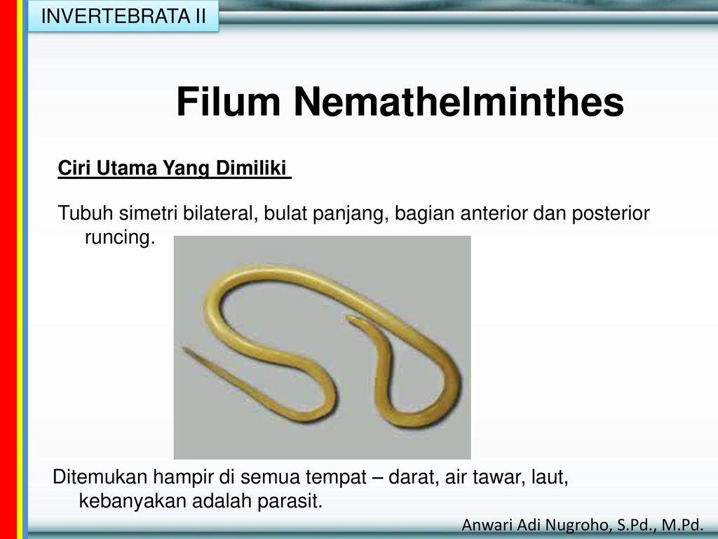 filum nemathelminthes lengkap)