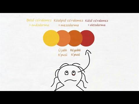 hogyan lehet megérteni mi a gömbféreg)