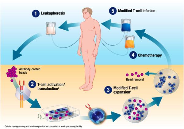 hpv és bőrelváltozások