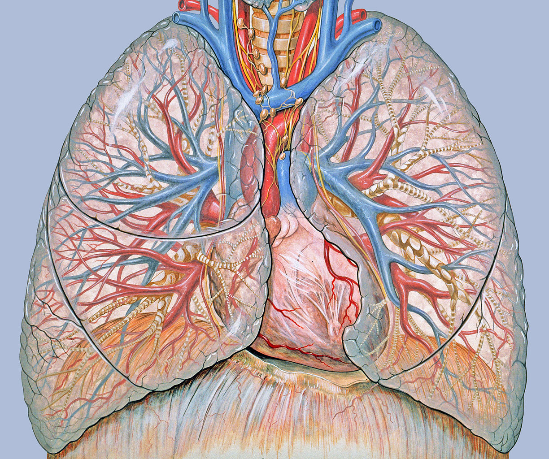 metasztatikus rák mennyi ideig élhet