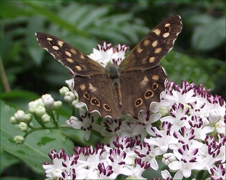 pillangó zeugma keresztény túra