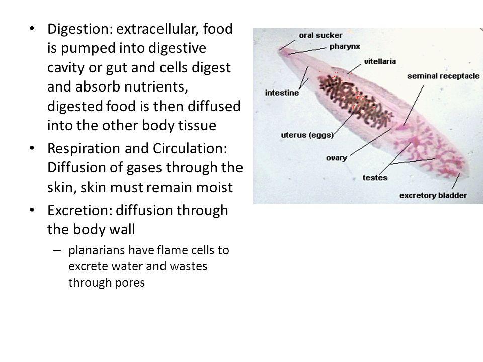 enterobiosis gyógyszer