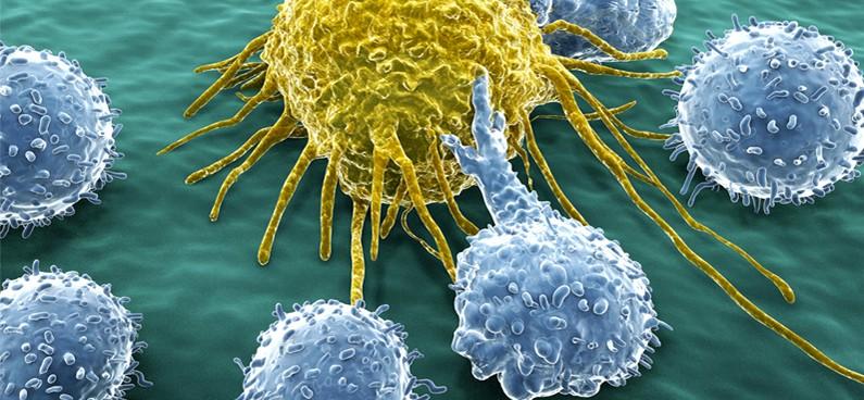 l vastagbélrák immunterápia